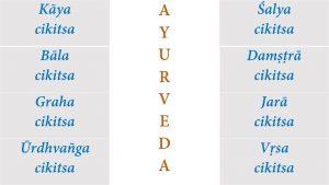 branch of ayurveda
